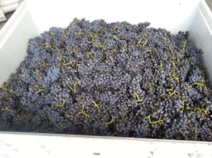 Ngawaka last bin of grape vintage 2013