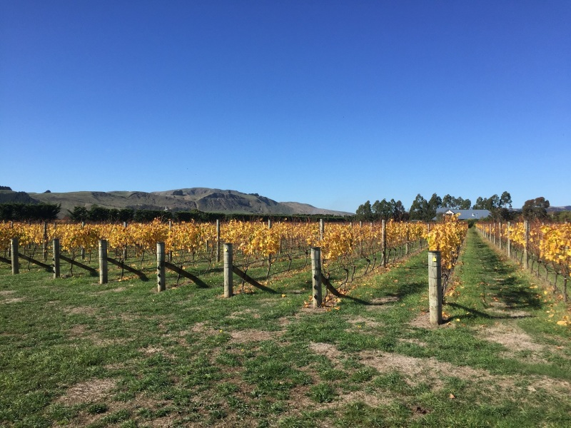 Martinborough Rows