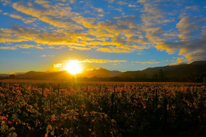 vineyard-herzog-sunset
